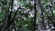 La Belle au Bois Dormant d'après l'Enfance au Bois Dormant.