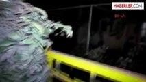 Manisa Turgutlu Kaçan Düve Sahibine Zor Anlar Yaşattı
