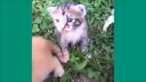 Les chats de Vine - Unbelievable vines lolcats 6 - funny cats vine