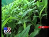 Bharuch 'Right Tree at Right Place' concept successful, prevents 'Air Pollution' - Tv9 Gujarati