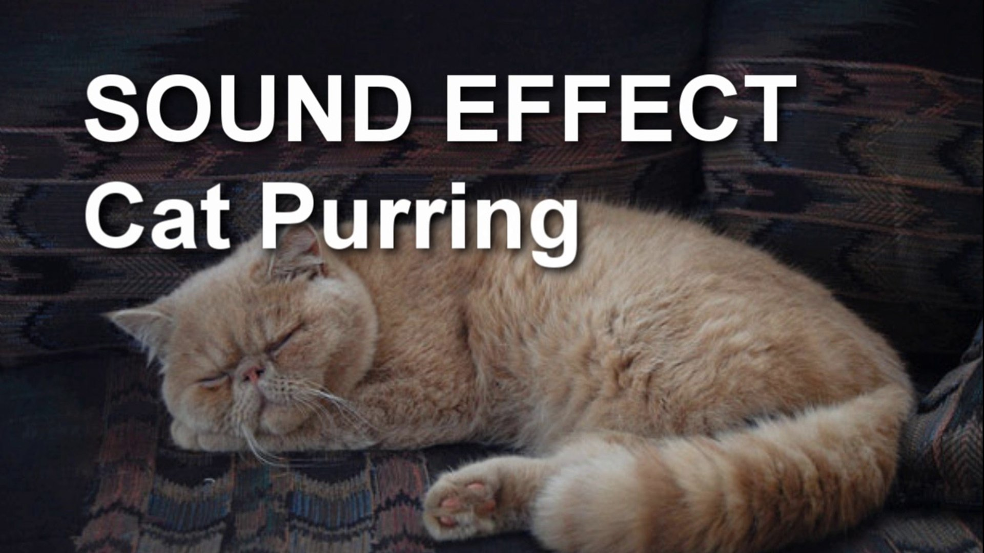 Cat Purring Sound Effect Video Dailymotion