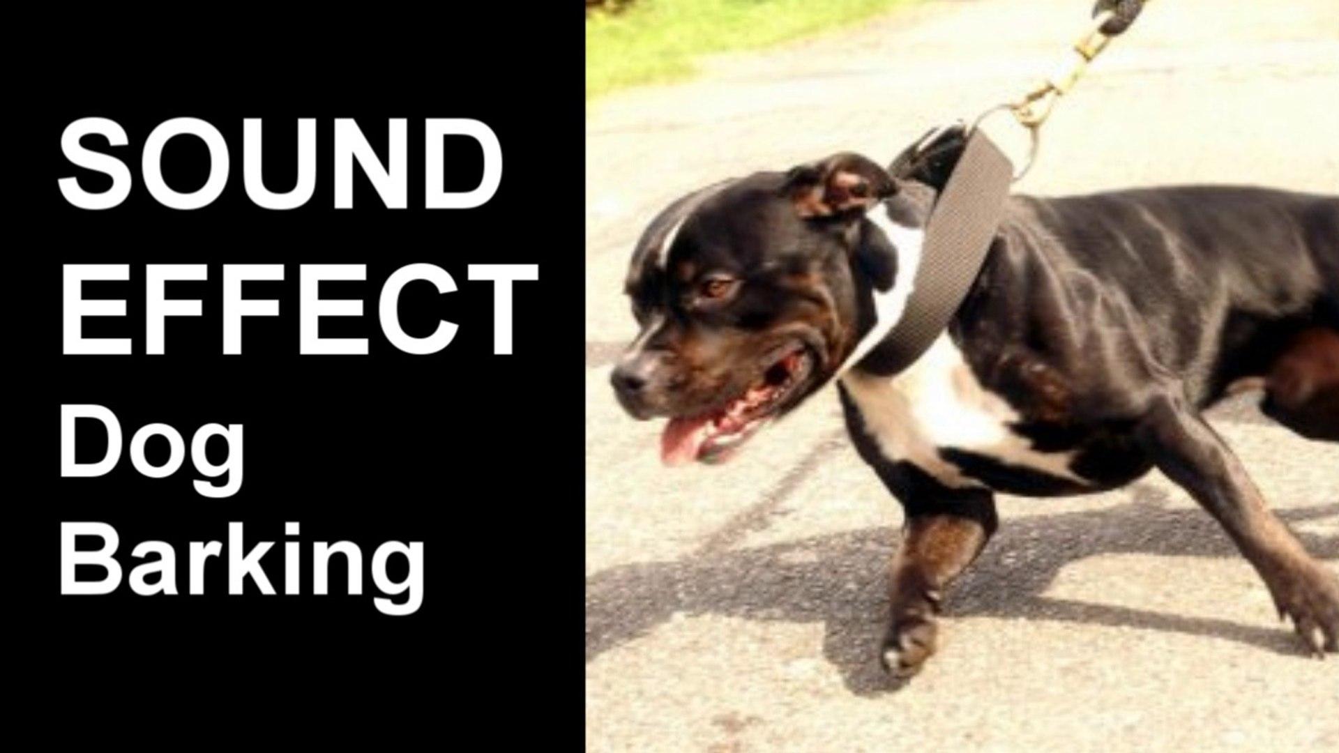 Vicious Dog Barking SOUND EFFECT Big Dog Barking,