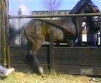 Funny ANIMALS Humor Comedy Funny Horse Kick _