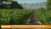 Le vin de Provence a la côte!