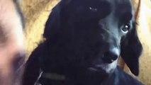 Des chiens stones après une visite chez le vétérinaires