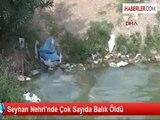 Seyhan Nehrinde Balık Ölümleri