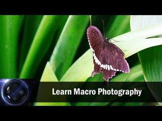 Learn Macro Photography || Shraddha Kadakia