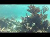 Massif Corallien - Plongée CANCUN MEXIQUE