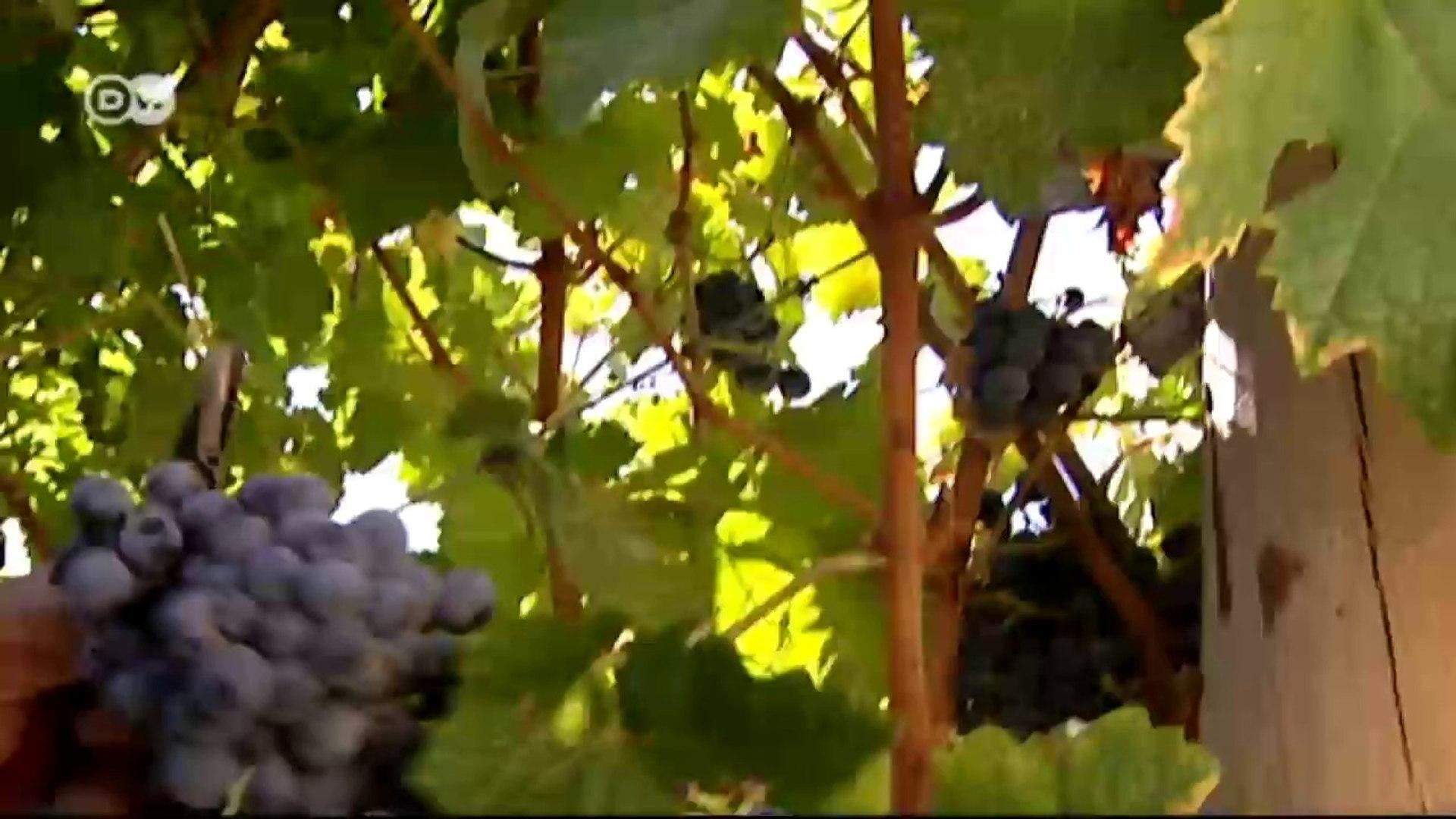 Wein und Sherry aus Jerez | Euromaxx