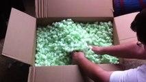 Les furets qui jouent dans emballage Peanuts - Animaux Furets