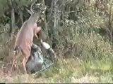 Karma ! Un cerf passe un chasseur à tabac à coup de sabot !