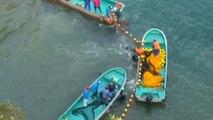 Taiji 'cove' dolphin hunt: 5 horrible facts
