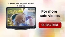 Best Of Funny Cats And Dogs Meeting Babies For The First Time Compilation 2014