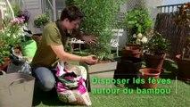 Déco Brico Jardinage : Planter et entretenir un bambou