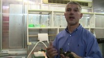 Des bébés crocodiles nains d'Afrique sont nés à Pierrelatte