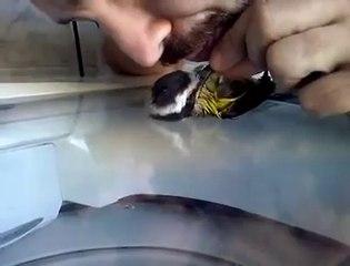 Kuşa Suni Teneffüs Yapıp Hayata Döndürdü