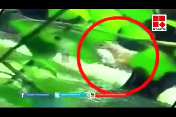 White Tiger Kills Student inside Zoo