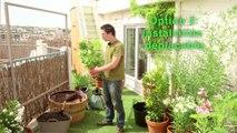 Déco Brico Jardinage : Planter une plante grimpante