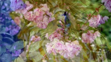Robert Schumann - Schumann: Carnaval for Piano, Op. 9: V. Eusebius - VI. Florestan - VII. Coquette - VIII. Repliqué