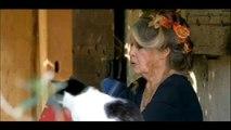 """Brigitte Bardot sur France 2 : """"J'aime beaucoup Marine Le Pen. Elle a une paire de couilles !"""""""