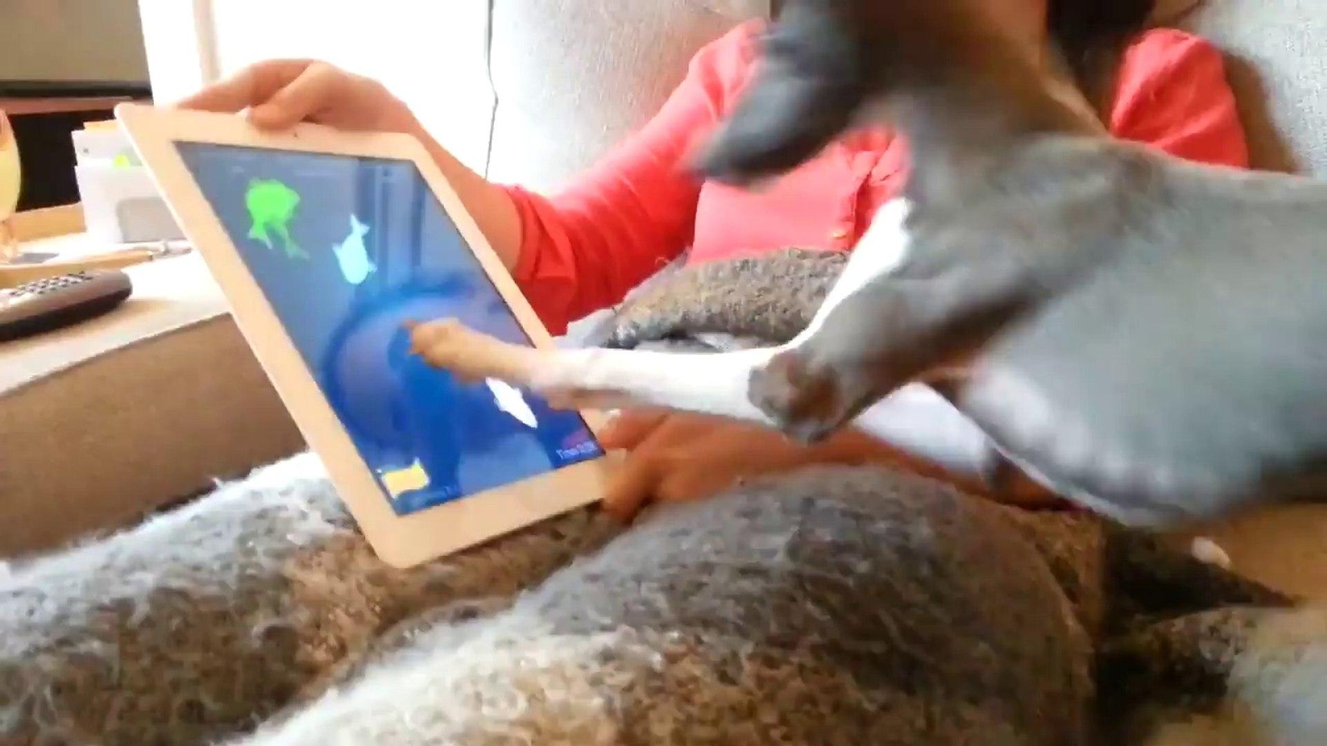 Кто сказал, что iPad это не для собак ?