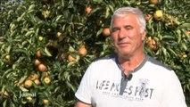 En route pour la cueillette des pommes à Apremont