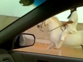 Riding horses(arabian riding)alwatear