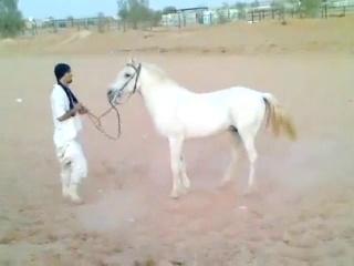 Riding horses(arabian riding)laying down