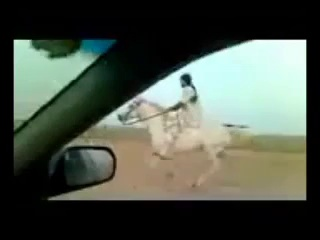 Riding horses(arabian riding)gallop videos