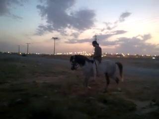Riding horses(arabian riding)13 minutes ride
