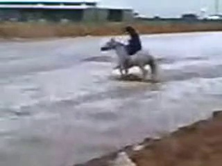 Riding Horses(Arabian Riding)Riding in the water