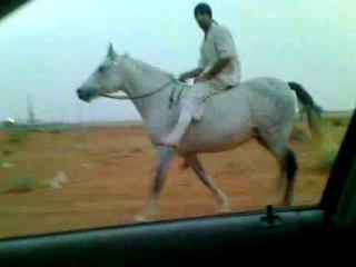 Riding Horses(Arabian Riding)Total Control