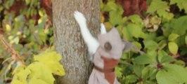 Assassin's Kittens Unity - Assassins Creed Kitty Cat
