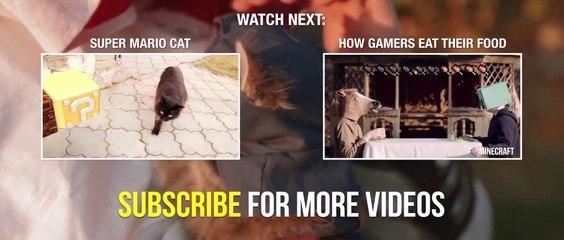 Assassin's Kittens Unity de Assassin's Creed Unity