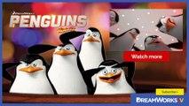 Madagascar Animals: Gossip About The Penguins - Penguins of Madagascar
