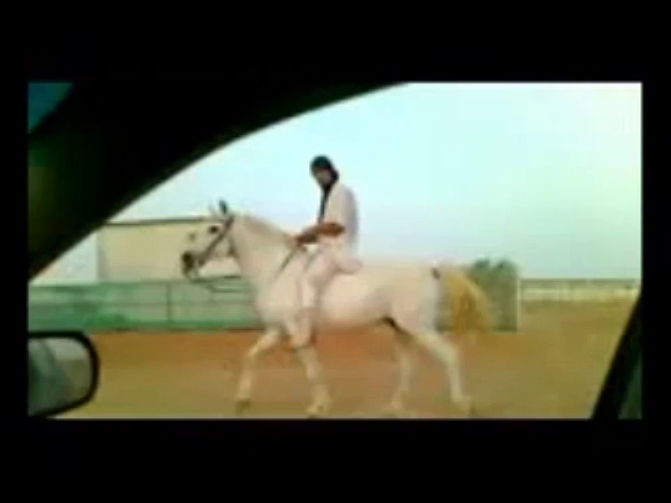 Riding Horses(Arabian Riding)gallop videos