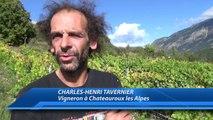 Hautes-Alpes : Interview de Charles-Henri TAVERNIER - Vigneron à Chateauroux les Alpes