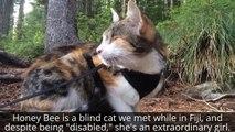 Vous ne croirez jamais que c'est chatte est aveugle !