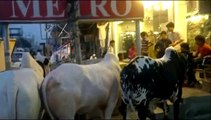 3 Very Big and beautiful Cow In Near my home market For Eid-e-QURBAN [2-10-2014]