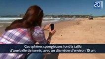 Des boules vertes envahissent une plage de Sydney
