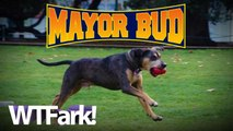MAYOR BUD: Occupy Movement Nominates Dog For Mayor Of Oakland. Dog Vows To Support Single-Bitch Families With Subsidized Milkbone Program