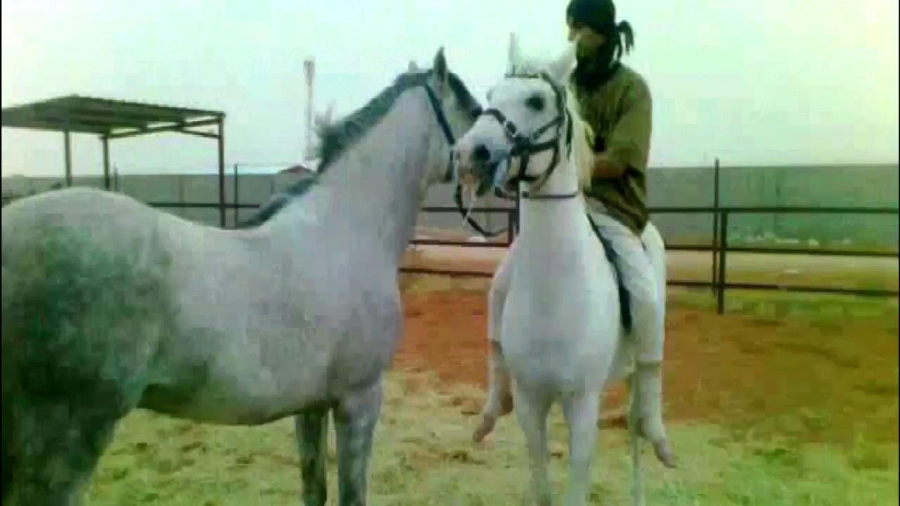 Riding Horses(Arabian Riding)Photos