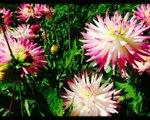 2014 (août) Parc floral de Paris (Vincennes)
