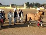 Prince Malik Ata with 1 of his dancing horses