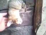 Un chat dort très très profondément