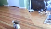 Funny animals for animal FAIL COMPILATION FAIL 2013 feil 2013 funny cat and dog fails ПРИКОЛЫ 2013(1)