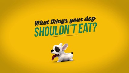 Food that your dog shouldn't eat