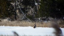 Deer crossing Knotts Creek, Suffolk VA