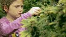 Du cannabis médical contre la leucémie infantile (STFR)