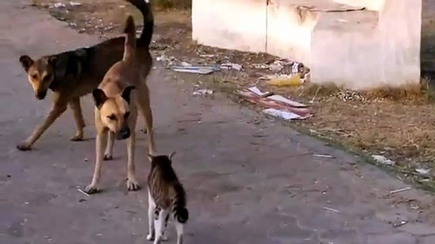 Young Cat vs Pack of Dogs - Funny -  Кот против Своры Собак ! - Прикол !